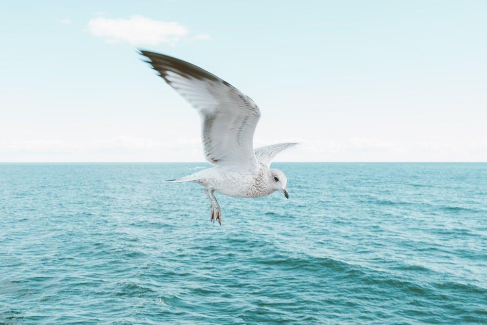 Let go Fly Freedom Bird